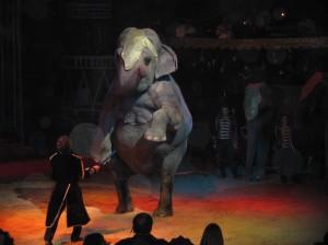 Bellucci e gli elefanti